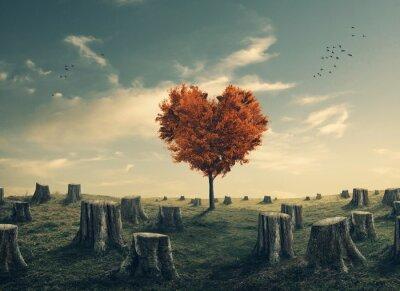 Väggdekor Hjärtformad träd i rensas skog