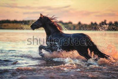 Väggdekor Horse