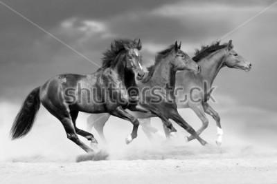 Väggdekor Horse herd run in dust