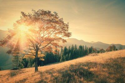 Väggdekor Höst träd och solstråle varm dag landskap tonas tappning