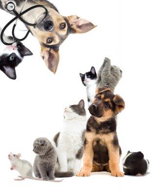 Väggdekor husdjur som söker