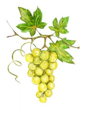 Väggdekor Illustration - gröna druvor