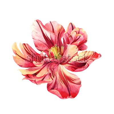 Väggdekor Isolerad akvarell rosa tulpan på vit bakgrund