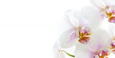 Väggdekor isolerade orkidéer
