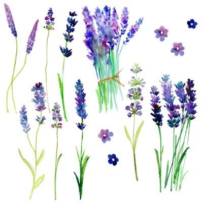 Väggdekor Isolerade Provence lavendel. Akvarell blommig inställd för din design.