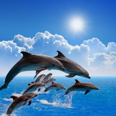 Väggdekor Jumping delfiner