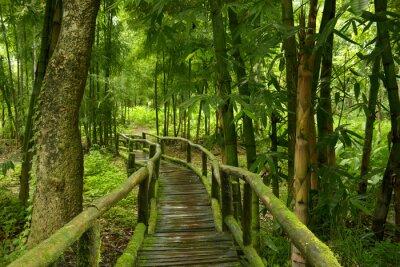 Väggdekor Jungla de Tailandia con puente de madera