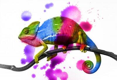 Väggdekor kameleont - färger