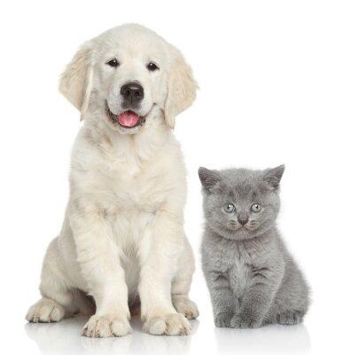 Väggdekor Katt och hund tillsammans