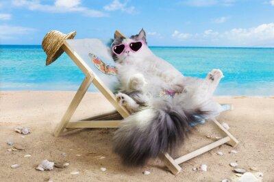Väggdekor katt som vilar på en solstol