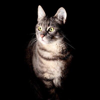 Väggdekor Katt, svart bakgrund