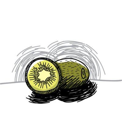Väggdekor Kiwi med bläck handritad-vektor illustration