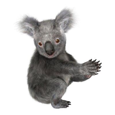 Väggdekor koala