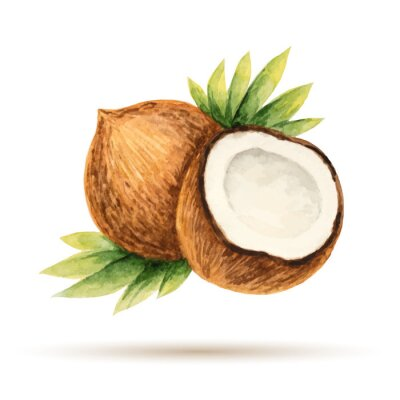 Väggdekor Kokos