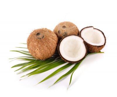 Väggdekor kokos på vit bakgrund