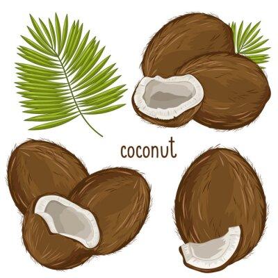 Väggdekor Kokosnöt Isolerad, Vector.
