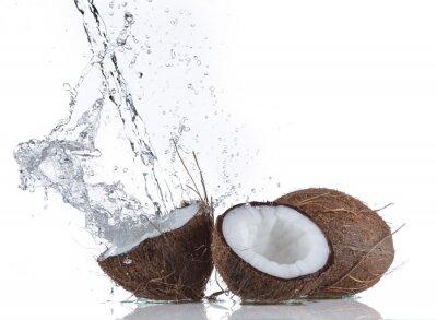 Väggdekor Kokosnötter med vattenstänk