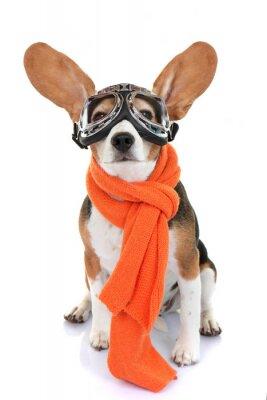 Väggdekor koncept för resor eller semester husdjur flygare
