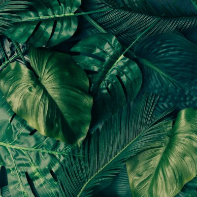Väggdekor Kreativ tropisk grön lövlayout. Natur vårkoncept. Plattläcka.