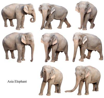 Väggdekor kvinnlig asia elefant isolerad