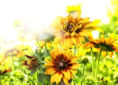 Väggdekor kwiaty
