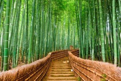 Väggdekor Kyoto, Japan Bamboo Forest