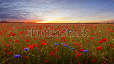 Väggdekor Landscape with poppies in Jutland, Denmark at sunset