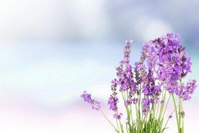 Väggdekor Lavendel.
