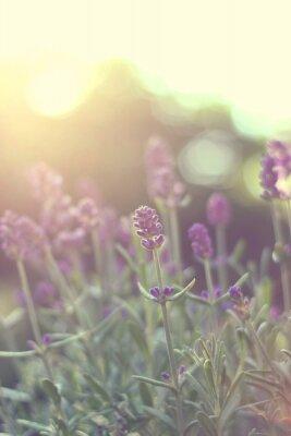 Väggdekor lavendel bakgrundsbelyst