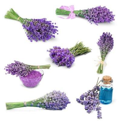 Väggdekor Lavendel, blomma, lavendel Färgad.