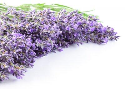Väggdekor Lavendel blommor bakgrund.