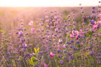 Väggdekor Lavendel fält.