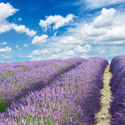 Väggdekor lavendel fält