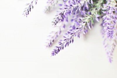 Väggdekor Lavendel gren på en vit bakgrund