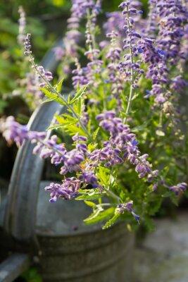 Väggdekor Lavendel i Garden Vattenkanna