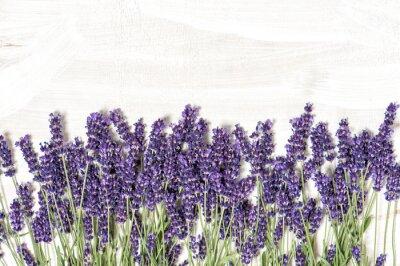 Väggdekor Lavendel över vit trä textur bakgrund