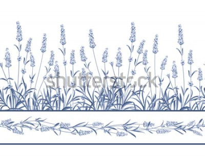 Väggdekor Lavendel sömlös ramlinje. Grupp av lavendelblommor på en vit bakgrund. Vektorillustration.