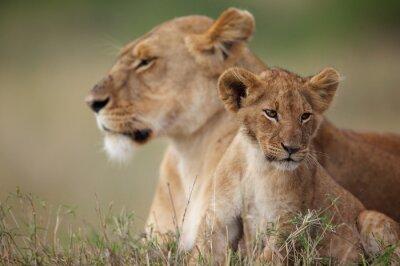 Väggdekor Lejon unge med sin mor i bakgrunden