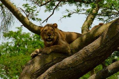 Väggdekor lion 7
