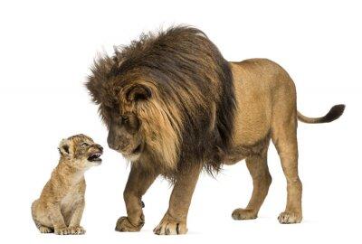Väggdekor Lion står och ser lejon unge