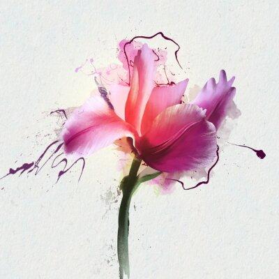 Väggdekor Ljus, vacker tulpan på en vit bakgrund. Ett släktträd med fleråriga örtplantor av Lily-familjen