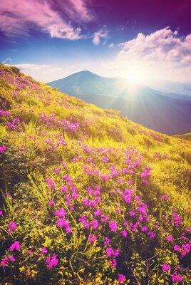 Väggdekor Ljusa Carpathian morgon