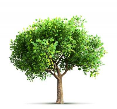 Väggdekor lönnträd isolerat