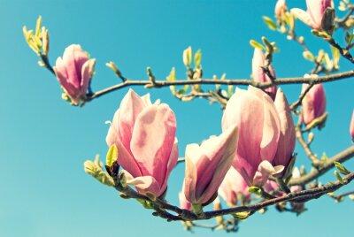 Väggdekor magnolia
