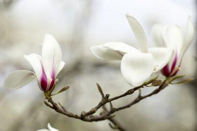 Väggdekor Magnolia.