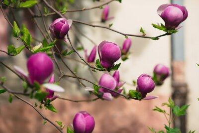 Väggdekor magnolia blommor