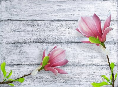Väggdekor Magnolia blommor på bakgrund av lumpen träplankor