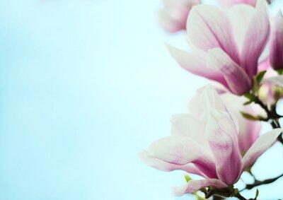Väggdekor magnolia blommor på en bakgrund av blå himmel