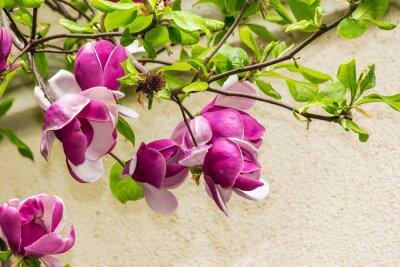 Väggdekor magnolia blommor på en blury bakgrund