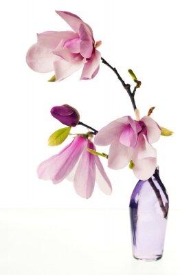 Väggdekor Magnolia Jane Blossoms